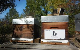 ruche bellon import