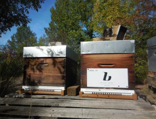 Un toit pour les abeilles…