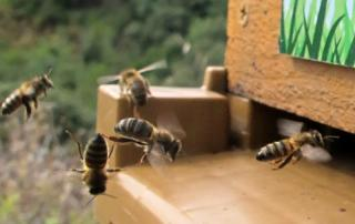ruche-bellon-import